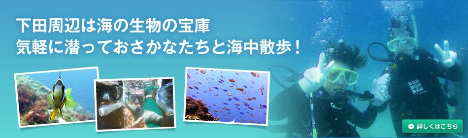 下田周辺は海の生物の宝庫。気軽に潜っておさかなたちと海中散歩!