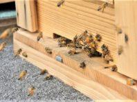 養蜂 最新 003