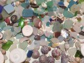 地元の海岸で見つけた貝殻とシーグラス
